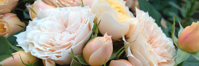 rozen snoeien april